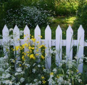 Biały ogrodowy płotek, który stanowi tło dla roślin