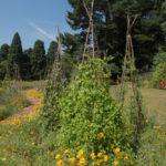 obelisk roślinny leszczyna