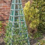 roślinny obelisk - groszek