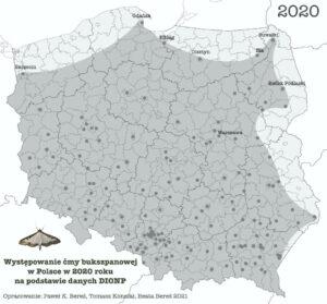 Występowanie ćmy bukszpanowej w Polsce w 2020 roku