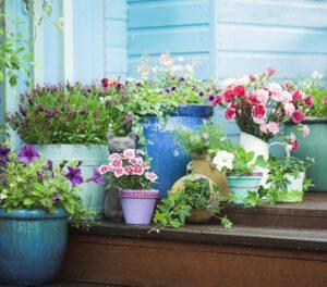 do przedogórdka warto wybierać rośliny które są odporne na uszkodzenia i łatwo się regenerują