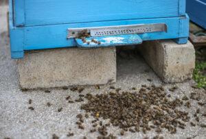 Pestycydy odpowiadają za masowe ginięcie owadów, w tym pszczół i innych zapylaczy
