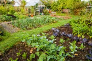 Pestycydy - Ogród powinien być ostoją bioróżnorodności