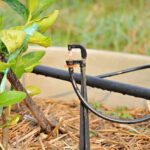 Nawadnianie - sposób na obniżenie temperatury gleby