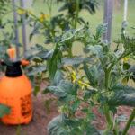 Dla większości środków ochrony roślin optymalna temperatura, w której powinno wykonywać się zabiegi to 12–20°C