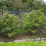 Stała konstrukcja do nałożenia siatki nad uprawą borówki
